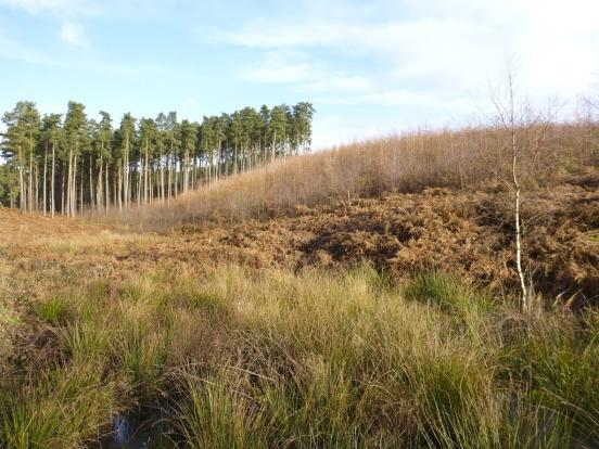 Cannock Chase, an Area of Outstanding Natural Beauty