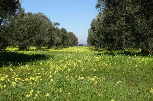 3 bedroom Farm House for sale in Apulia, Brindisi...