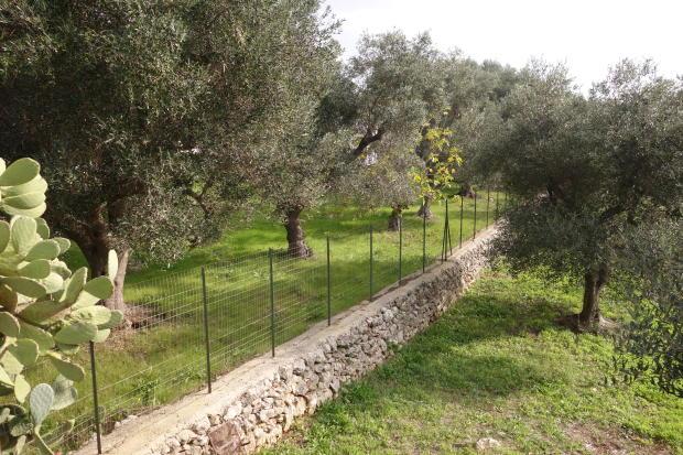 Well kept stone wall