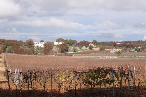 Vines and views