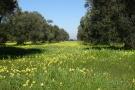 Beautifful land