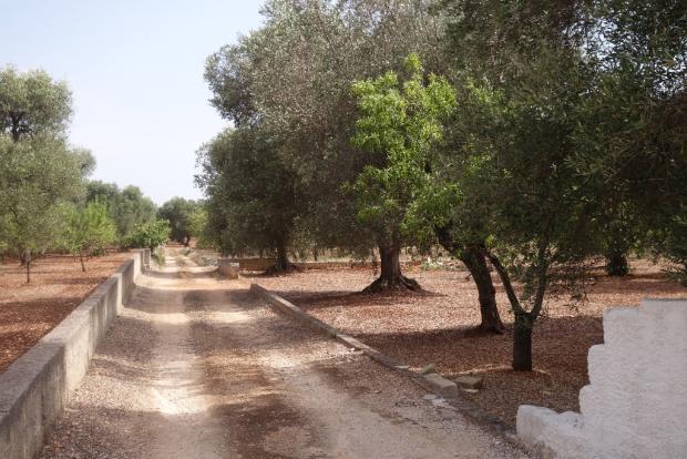 the access lane