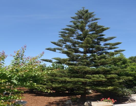 Garden decorative tr