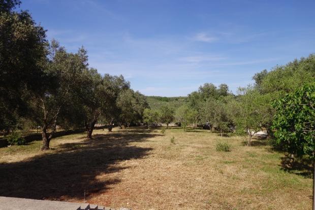 View of front garden