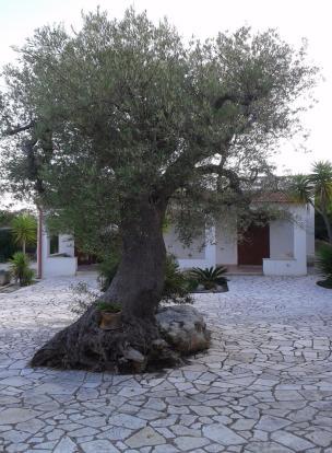 Decorative olive tre