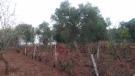 Viewof vineyard