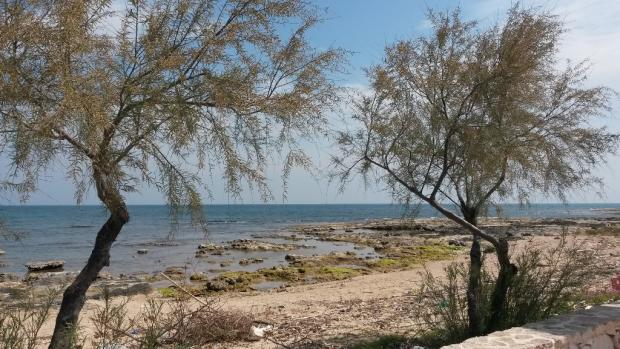 The coast line