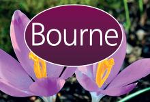 Bourne Estate Agents, Alton