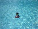 sparkling pool !