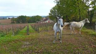 4 bed Commercial Property in Organic vineyard, Lot ...