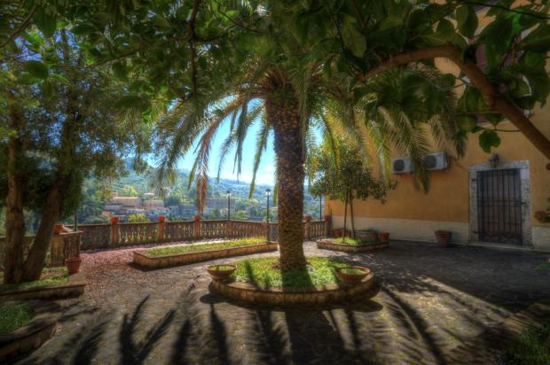 The fine palm tree