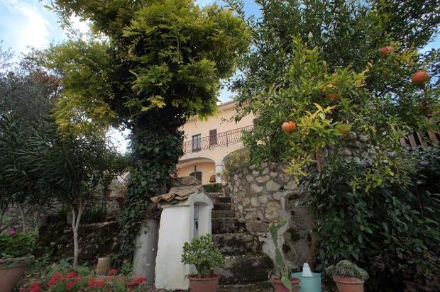 Mature fruit trees