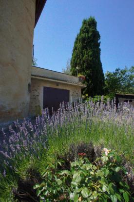 Garden - lavender