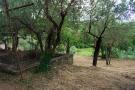 Garden & trees