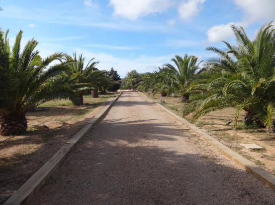 Entrance to finca surrounded by palm trees