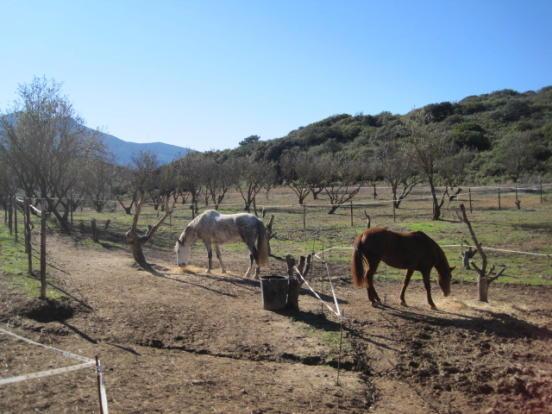 Horses on land