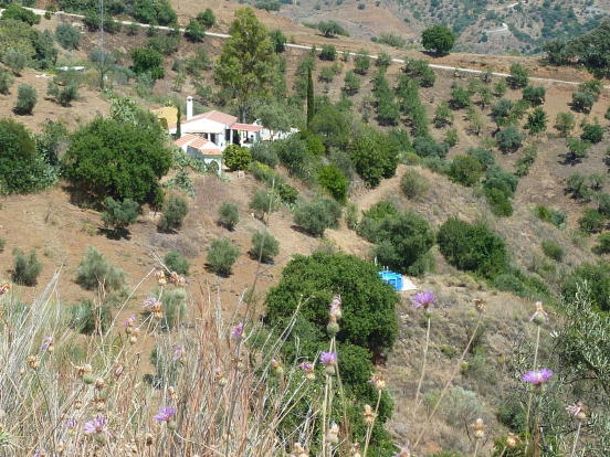 House on land