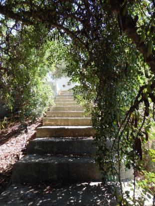 Steps on plot