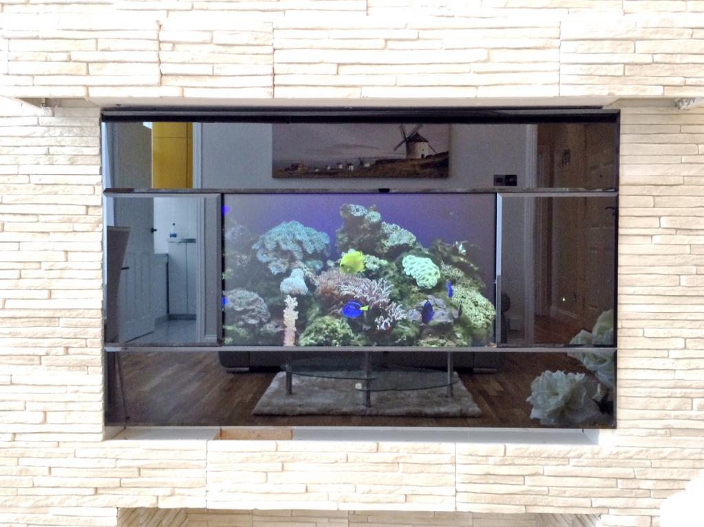 Focal Point Aquarium