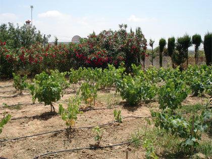 Vines - 3