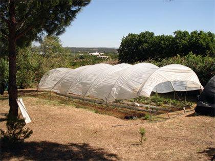Greenhouse Polytunel