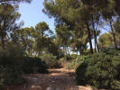 property for sale in Mallorca, Santa Ponsa, Nova Santa Ponsa