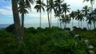 Coconut & Foliage