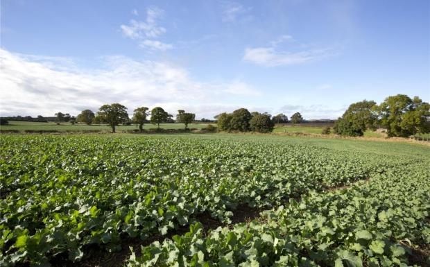 Winter Cropping