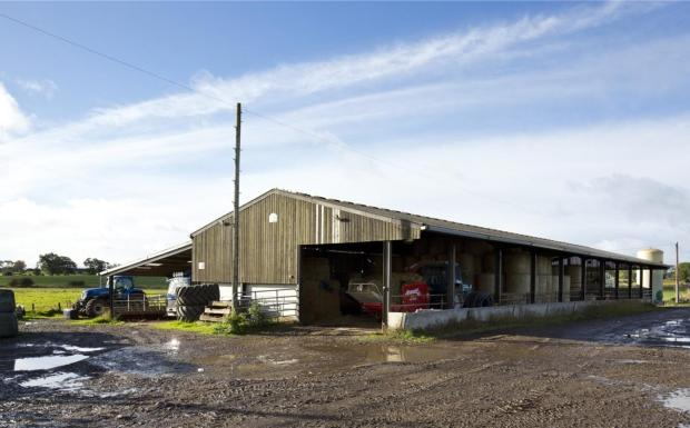 Cattle / Gp Shed