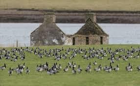 Wildlife on Orkney
