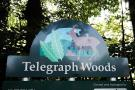 Telegraph Woods