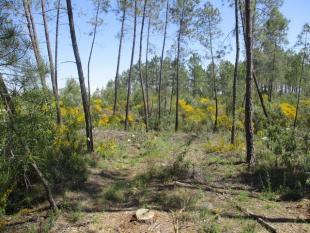 Salgueiro Do Campo Farm Land for sale