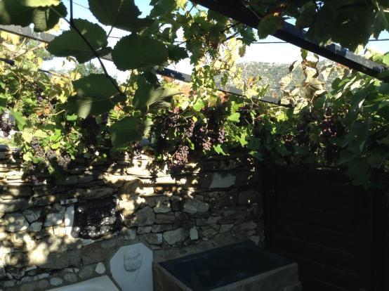 grape vines and bath