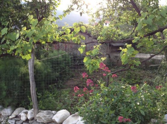 the garden annex