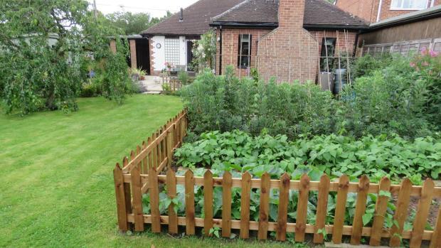Vegetable plot.JPG