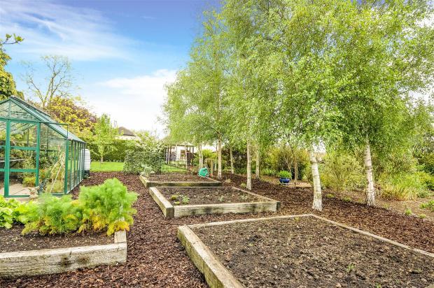 Ugg 258 veg garden 2