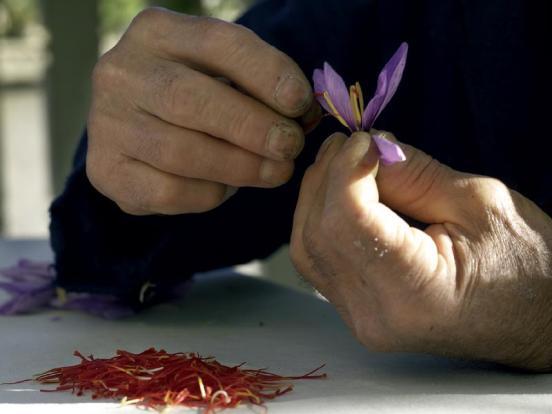 Navelli's Saffron