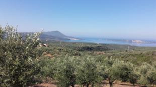 Land in Peloponnese, Messinia for sale