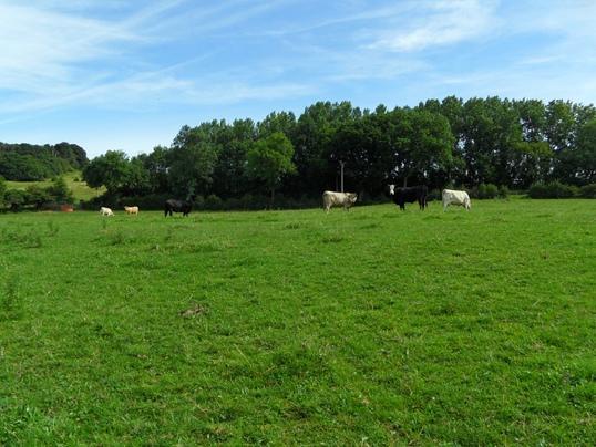 1.8 Grassland 12.68 acres approx