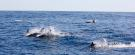 Dolphins Ferragudo