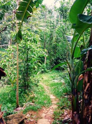 Path to Vegg garden