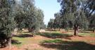 Land in Carovigno, Brindisi...