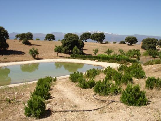 Pond & Sierra Nevada