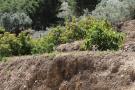 Canillas De Albaida Land for sale