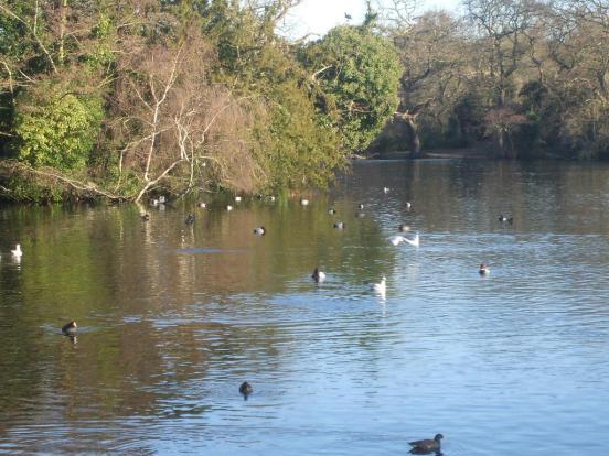 Highams Park Lake