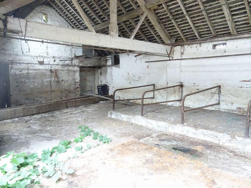 Cow barn inside