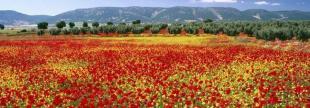 Provence-Alps-Cote d`Azur property