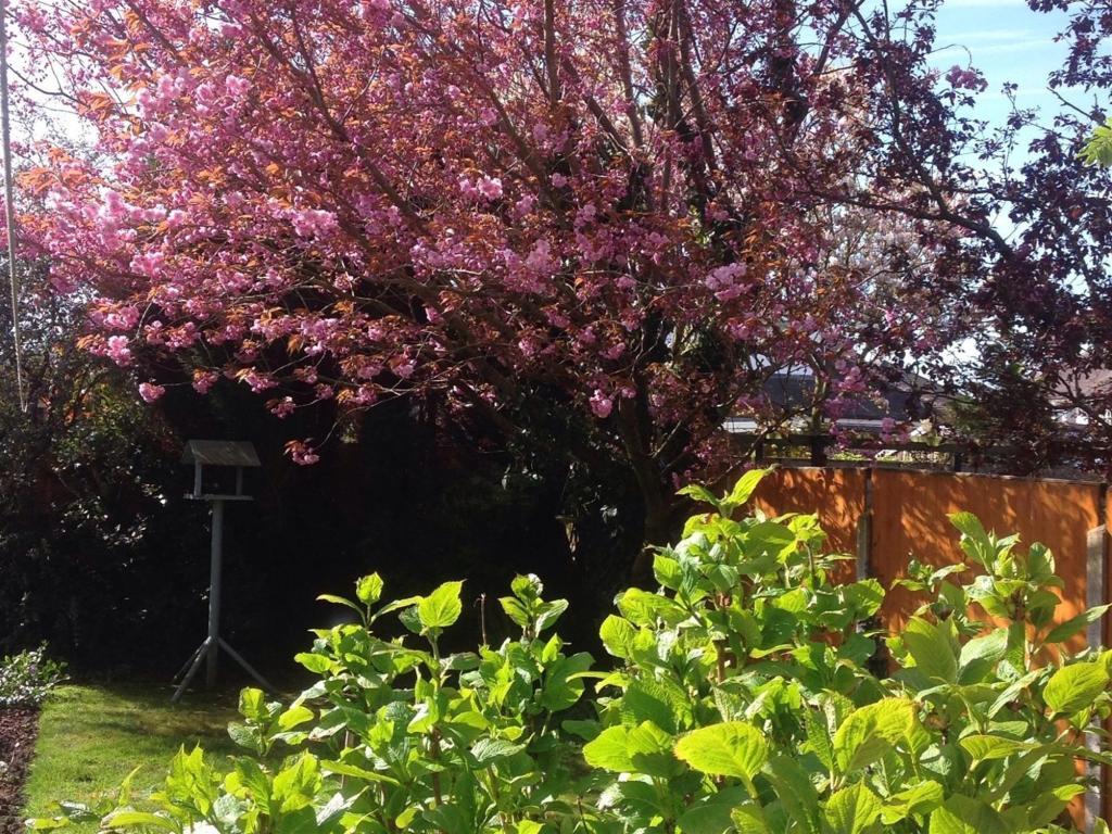 Garden Three