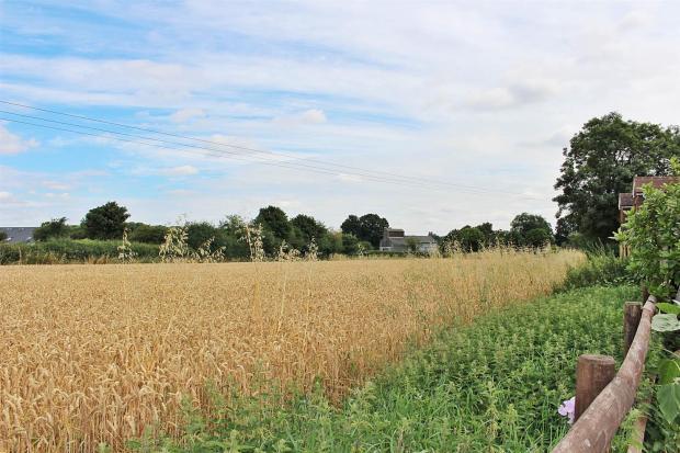 Corn field 2.JPG