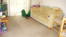 3 bedroom home to rent in Swan Drive, London, NW9